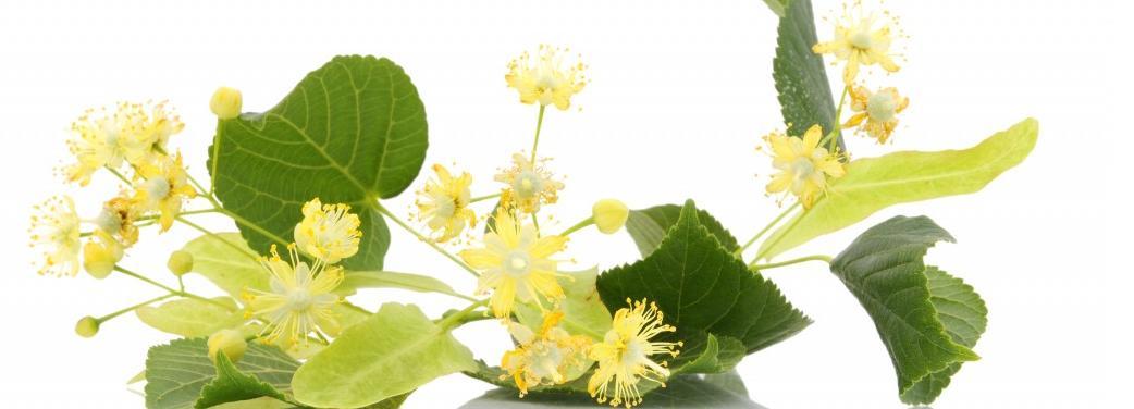 Живительные цветы лекарственных растений